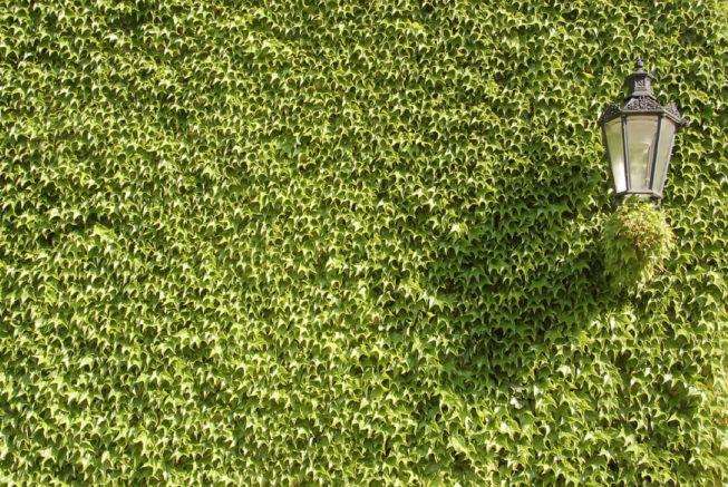 greenamwin-zielonasciana-eko-naszewartosci-male_440